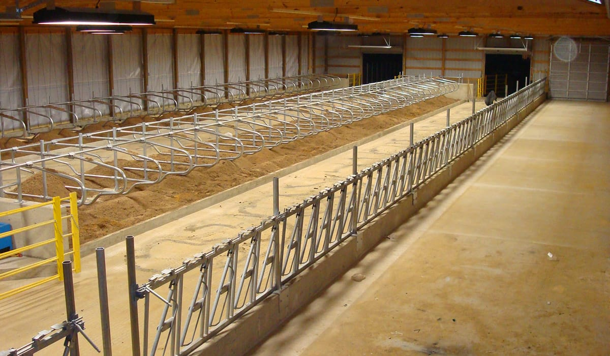 Newly built free stall cattle barn by Simmons Construction.